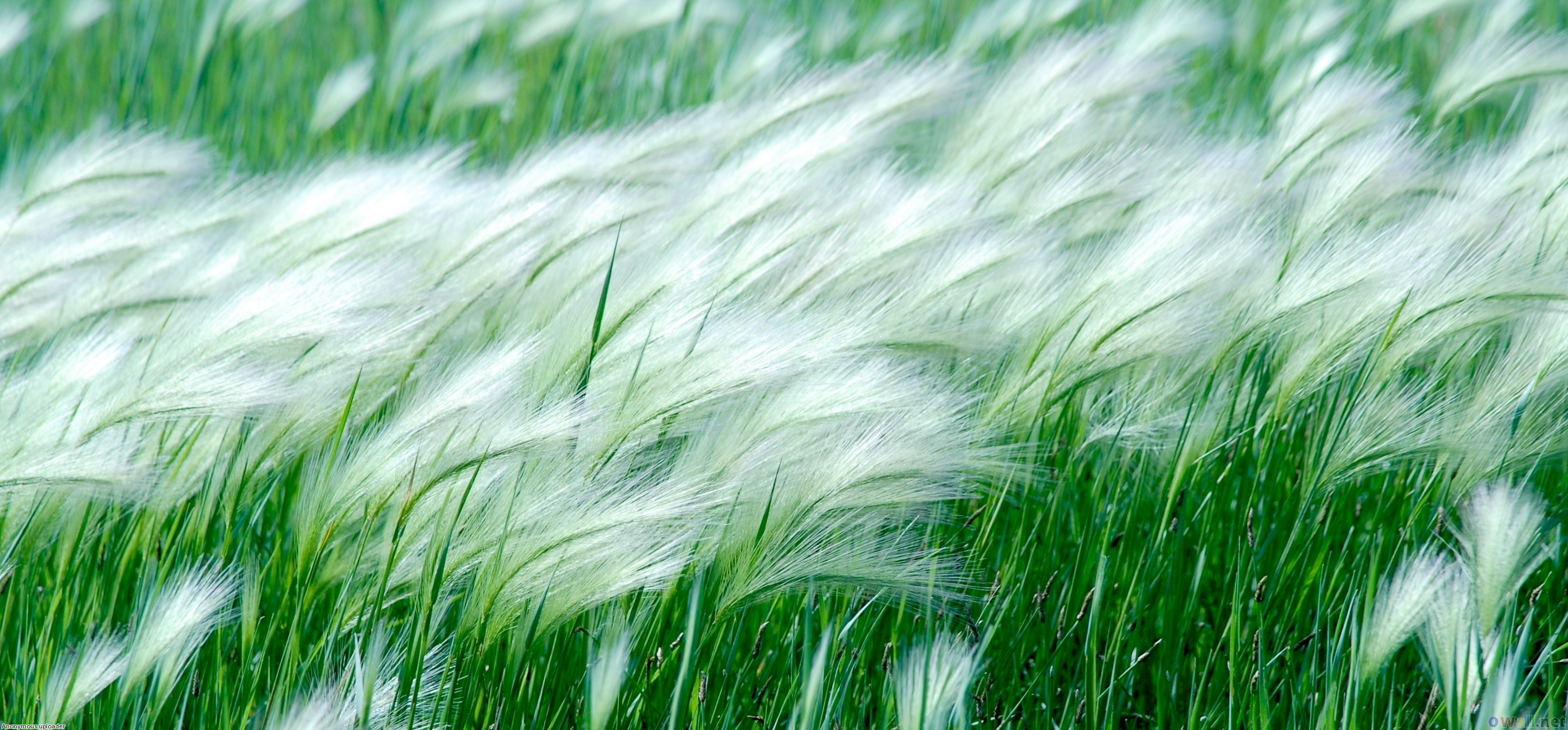 Theme of green this week we re going to talk about wind what does